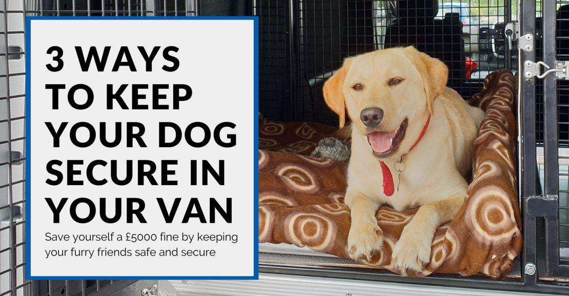 Transporting Dogs in Vans: 3 Ways to Keep Pets Safe in Transit